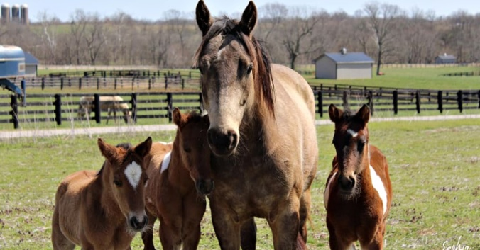 four-orphaned-foals-3
